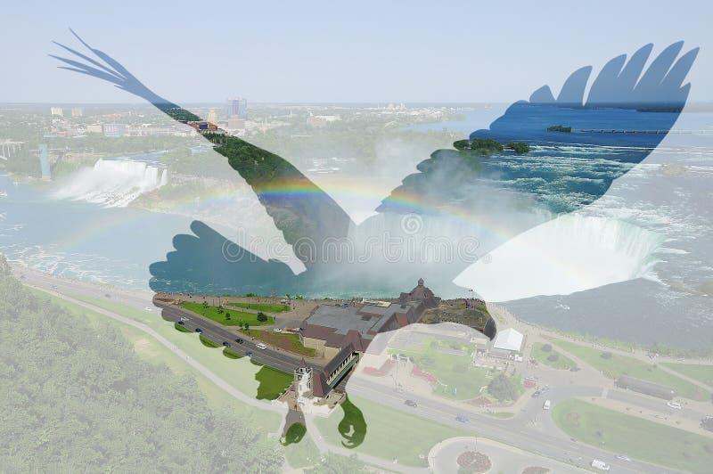 Aquila calva sul fondo di cascate del Niagara immagini stock