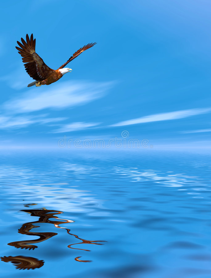 Aquila di volo illustrazione di stock
