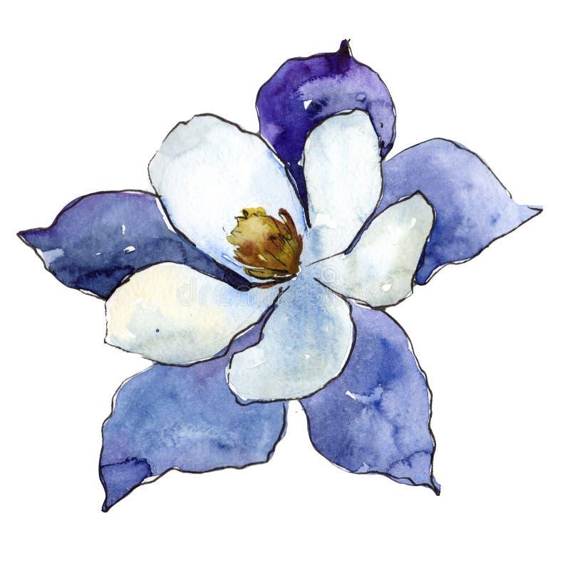 Aquilegia blu Fiore botanico floreale Wildflower selvatico della foglia della molla isolato royalty illustrazione gratis