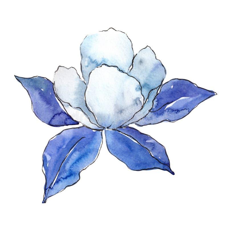 Aquilegia blu Fiore botanico floreale Wildflower selvatico della foglia della molla isolato illustrazione vettoriale