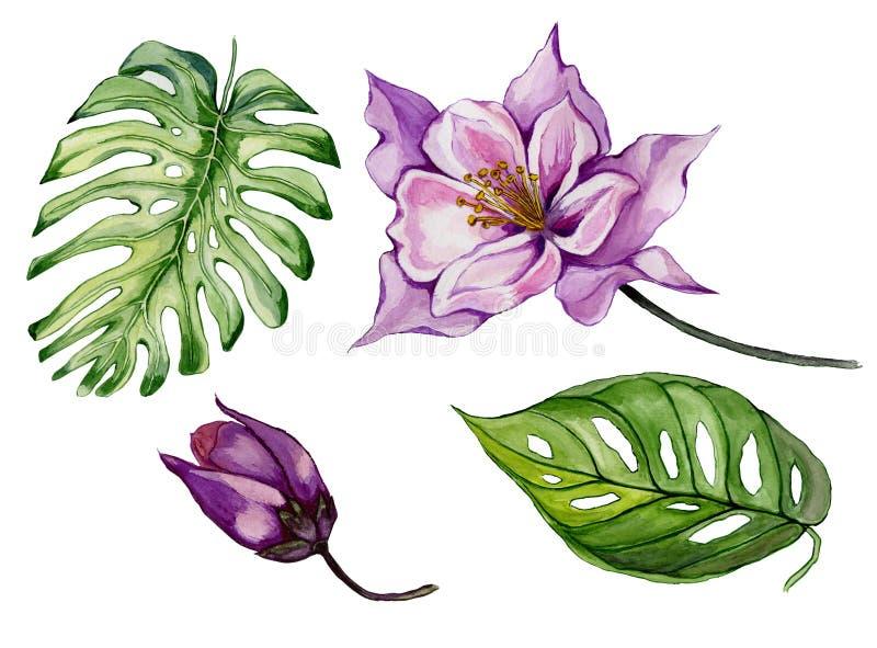 Aquilegia porpora, germoglio e foglie del bello insieme floreale tropicale Fiore variopinto e foglie verdi di colombina isolati illustrazione di stock