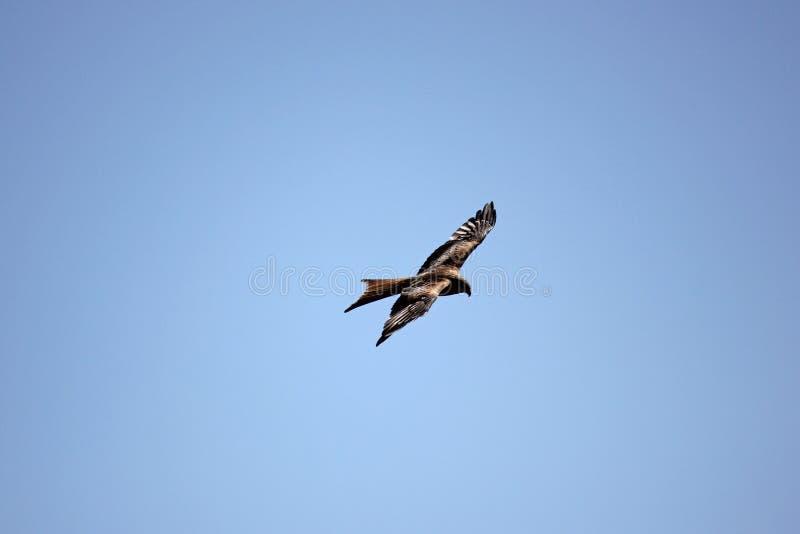 Aquilone che vola su nel cielo fotografie stock