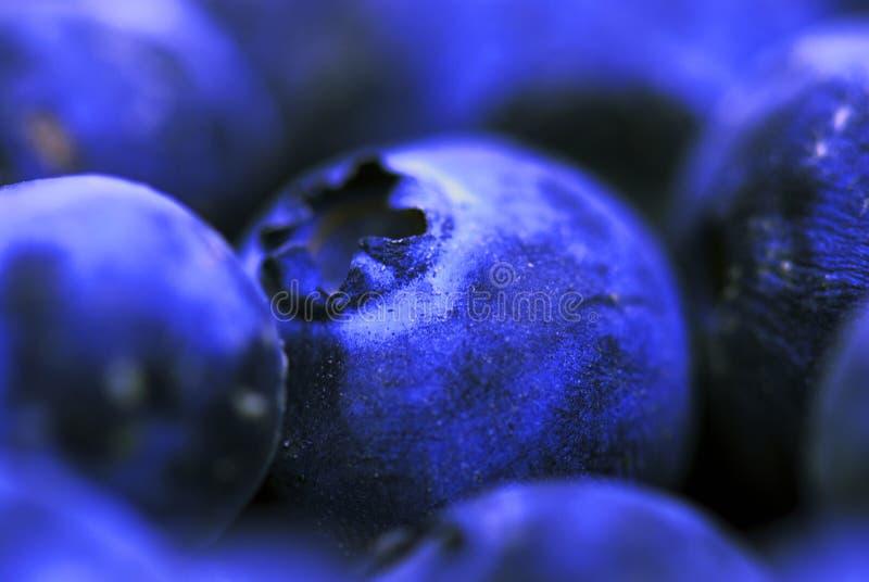 Download Arándanos imagen de archivo. Imagen de violeta, redondo - 7278301