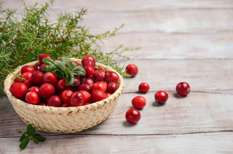 Arándanos rojos frescos de la cosecha en cesta de mimbre imágenes de archivo libres de regalías
