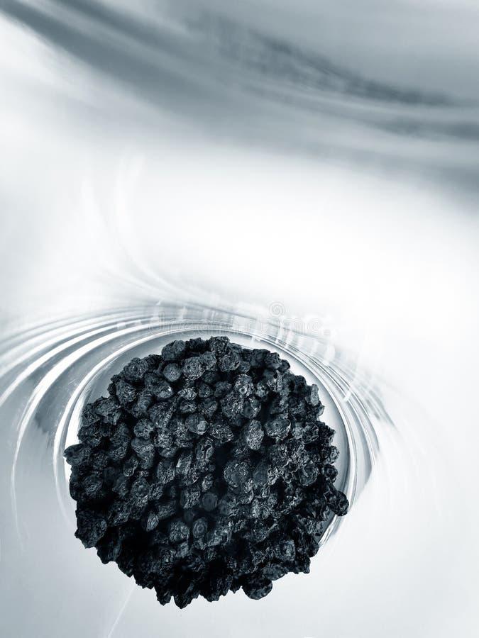 Arándanos secos en un cubilete de cristal en un blanco imágenes de archivo libres de regalías
