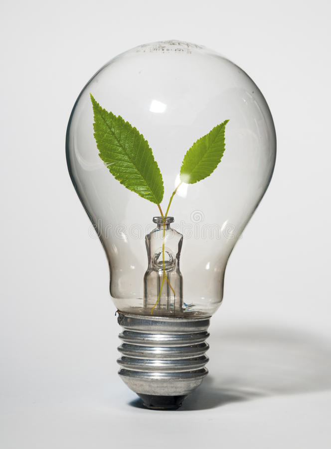 Żarówka czysta energia obraz royalty free