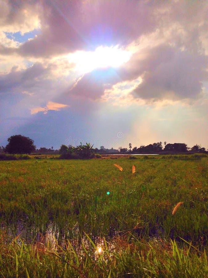ar do céu da luz do arroz do campo fotos de stock royalty free