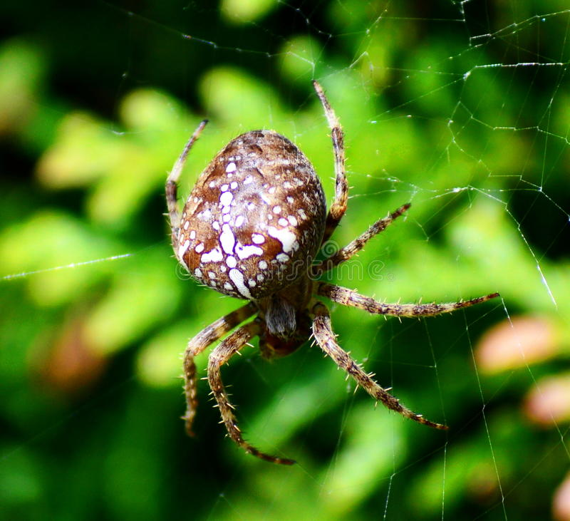 Download Araña foto de archivo. Imagen de ella, araña, cruz - 44851800