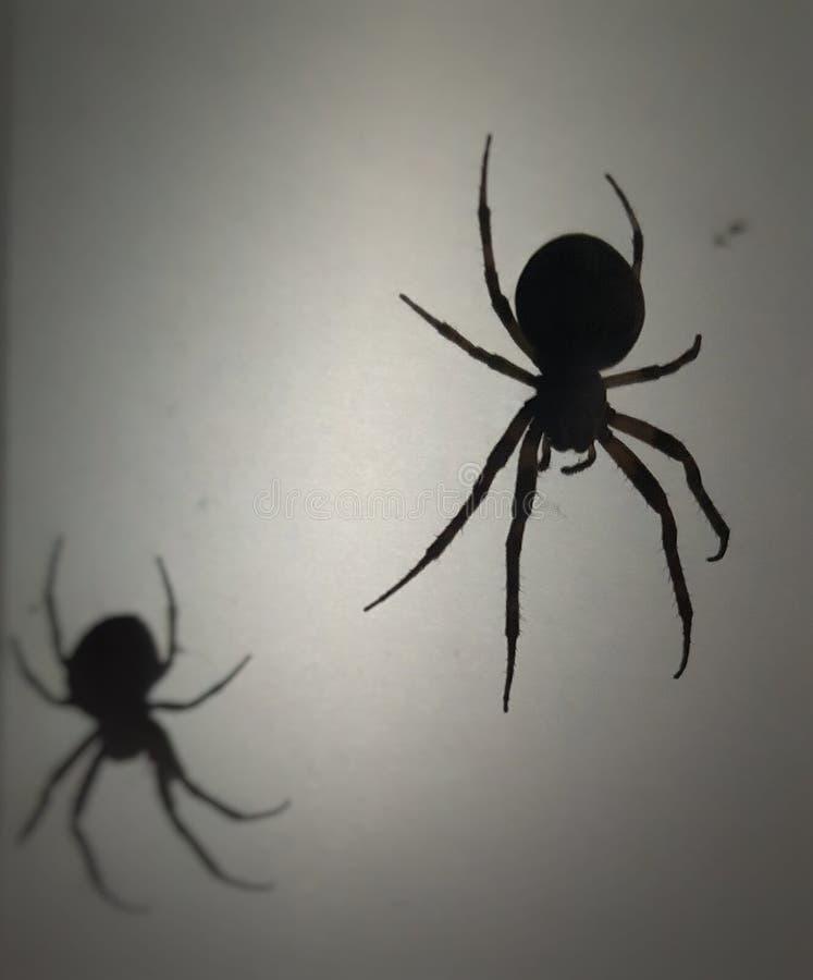 Araña apenas que cuelga hacia fuera con el it& x27; sombra de s fotos de archivo