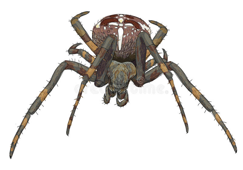 Araña asustadiza del retrato. stock de ilustración
