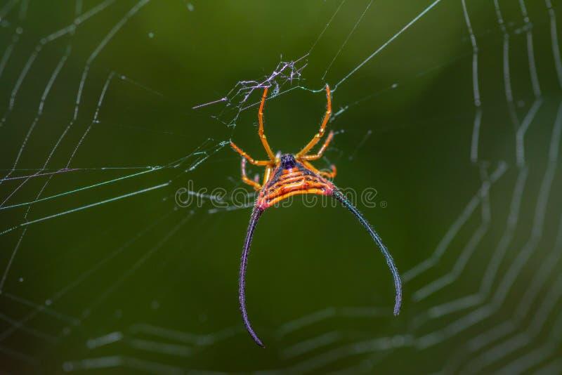 Araña con el spiderweb hermoso fotografía de archivo libre de regalías