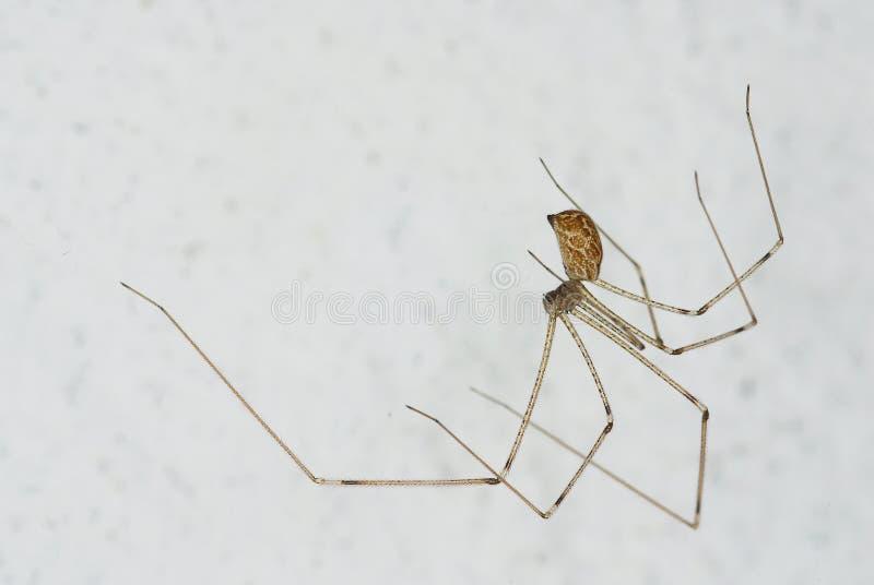 Araña de la casa fotografía de archivo