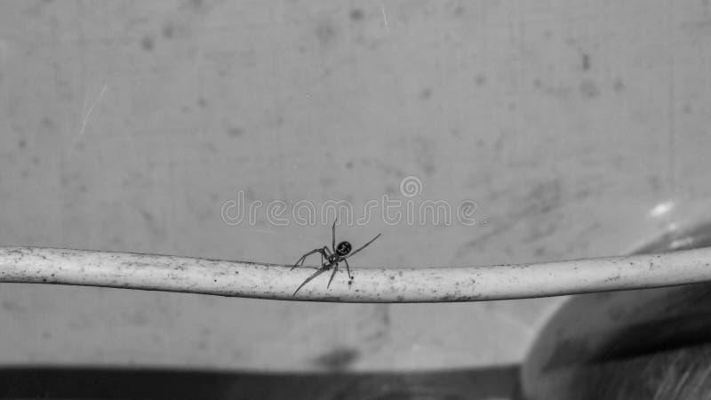 Araña de la casa, entre las tejas y el alambre fotografía de archivo libre de regalías