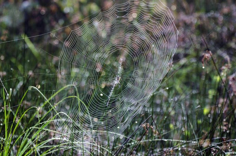 Araña de la cremallera del jardín del amarillo del web de araña imagen de archivo