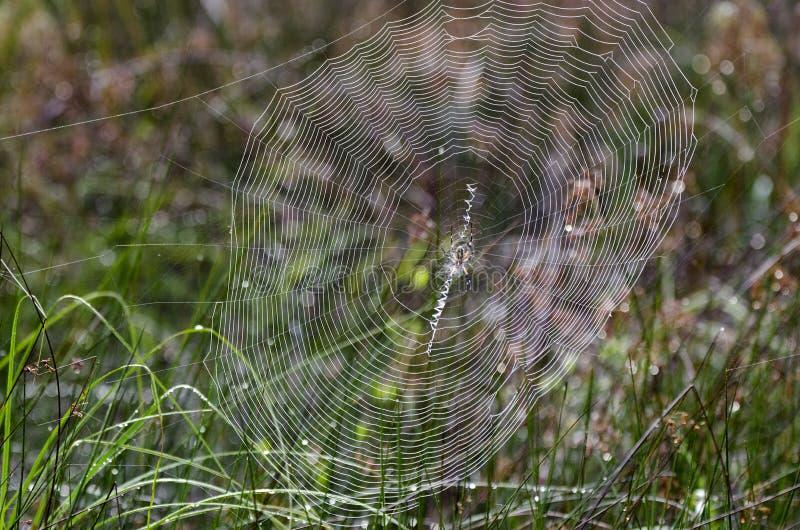 Araña de la cremallera del jardín del amarillo del web de araña imagen de archivo libre de regalías