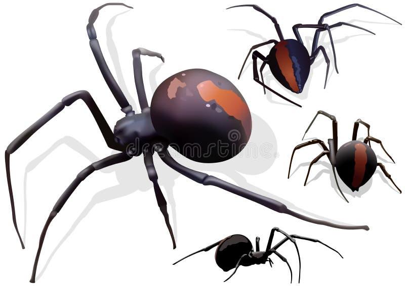 Araña de la viuda negra stock de ilustración