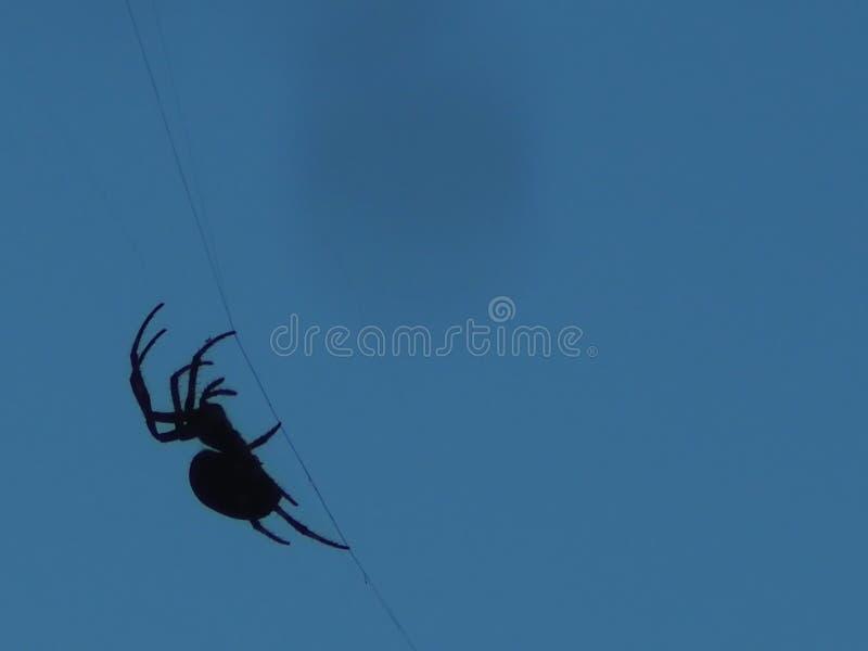 Araña de la viuda negra en la web en fondo del cielo azul en esquina imagenes de archivo