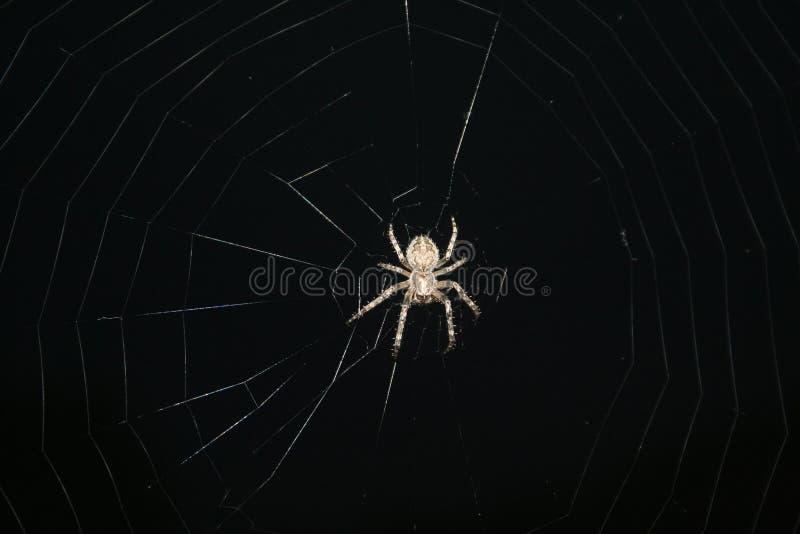 Araña de los insectos del diseño fotos de archivo