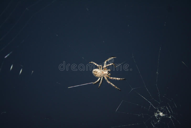 Araña de los insectos del diseño foto de archivo