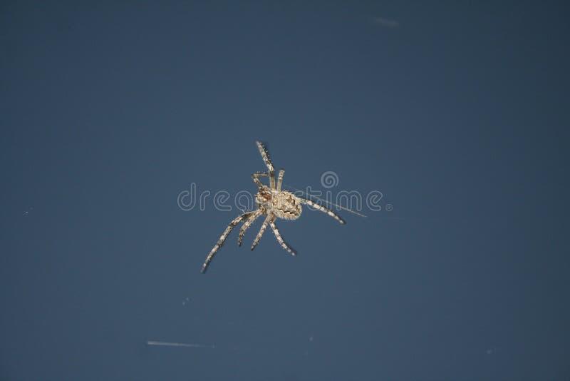 Araña de los insectos del diseño fotografía de archivo libre de regalías