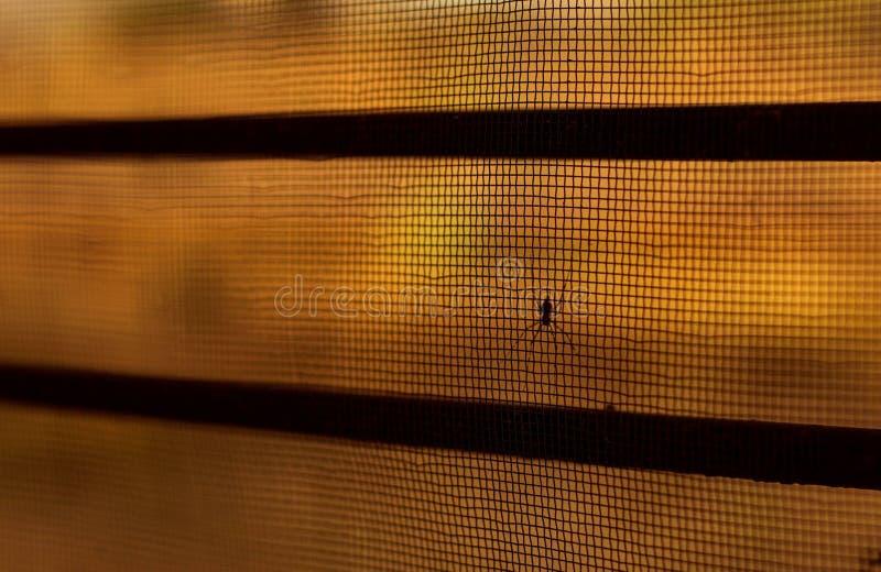 Araña en el beautifu neto l subtítulo imagen de archivo