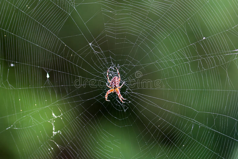 Araña en el Web fotografía de archivo libre de regalías