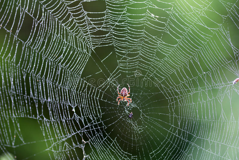 Araña en el Web fotos de archivo