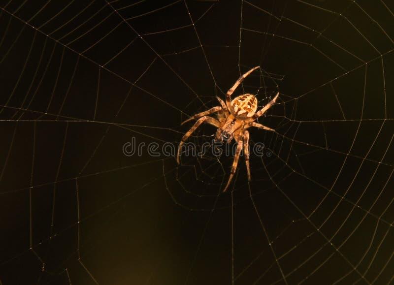 Araña en ella web del ` s fotos de archivo libres de regalías