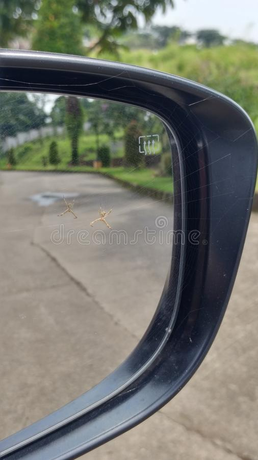 Araña en espejo retrovisor fotografía de archivo
