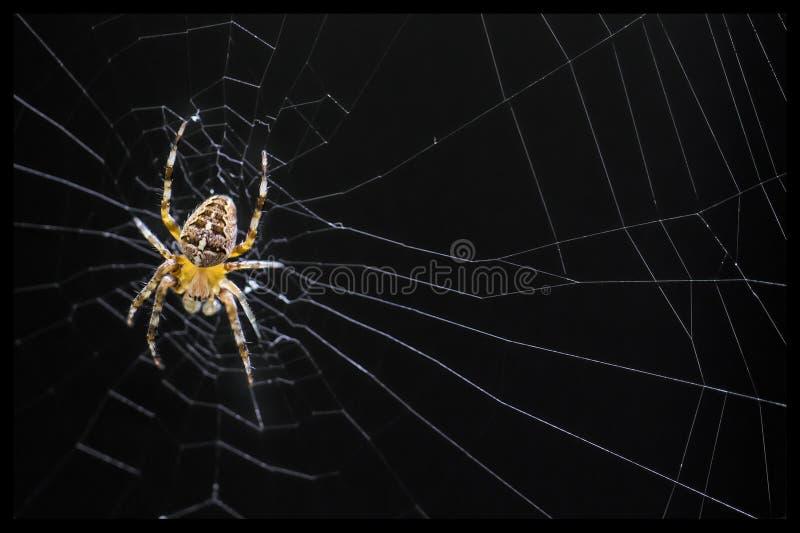 Araña en fondo negro fotos de archivo