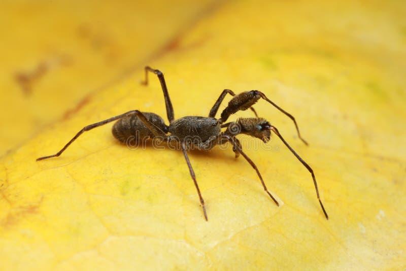 Araña en la hoja amarilla en naturaleza fotos de archivo
