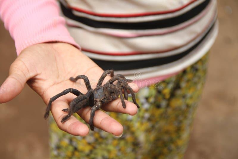 Araña en la mano foto de archivo