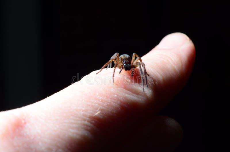 Araña en la mano imagen de archivo libre de regalías