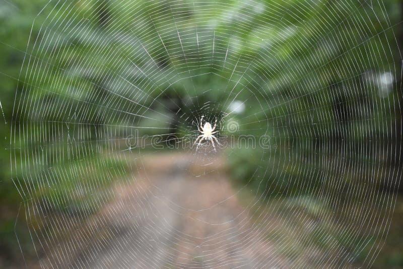 Araña en la pantalla imagen de archivo libre de regalías