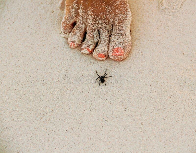 Araña en la playa arenosa blanca en Caribbeans fotografía de archivo libre de regalías