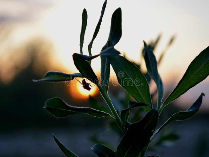 Araña en la puesta del sol fotografía de archivo
