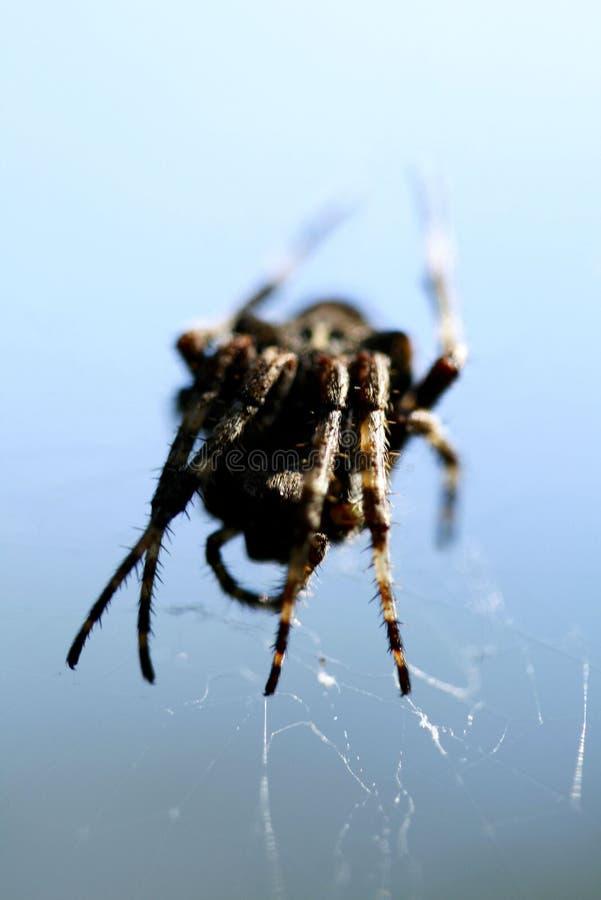 Araña en la telaraña fotos de archivo