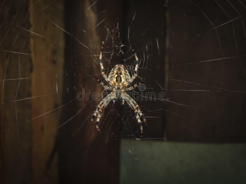 Araña en las cazas del spiderweb para los insectos fotos de archivo