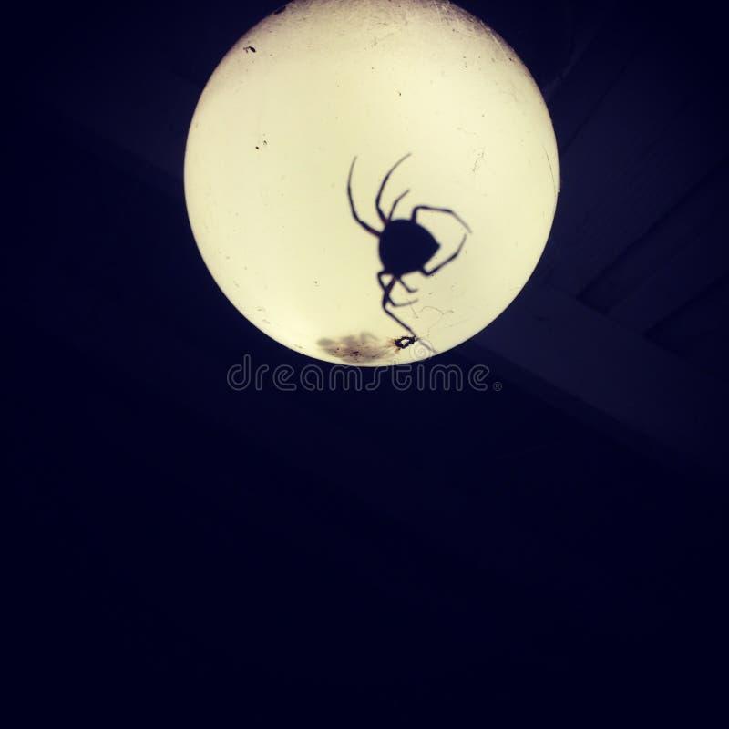 Araña en luz fotos de archivo