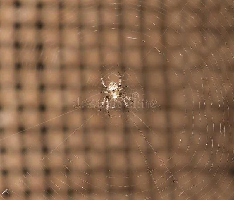 Araña en naturaleza cierre imagenes de archivo