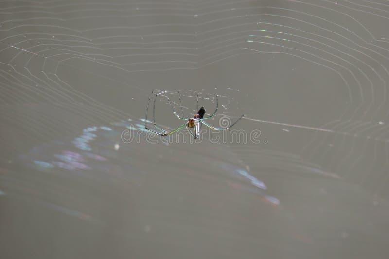 Araña en propio web de araña imagen de archivo libre de regalías