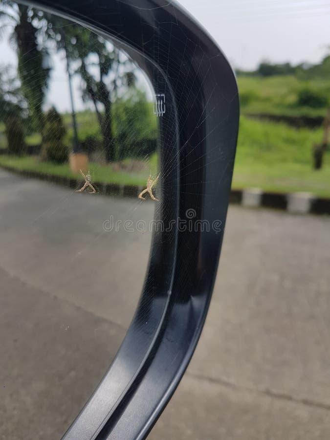 Araña en sideview fotografía de archivo libre de regalías