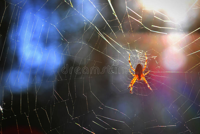 Araña en su Web imagen de archivo libre de regalías