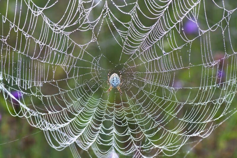Araña en un Web imagen de archivo