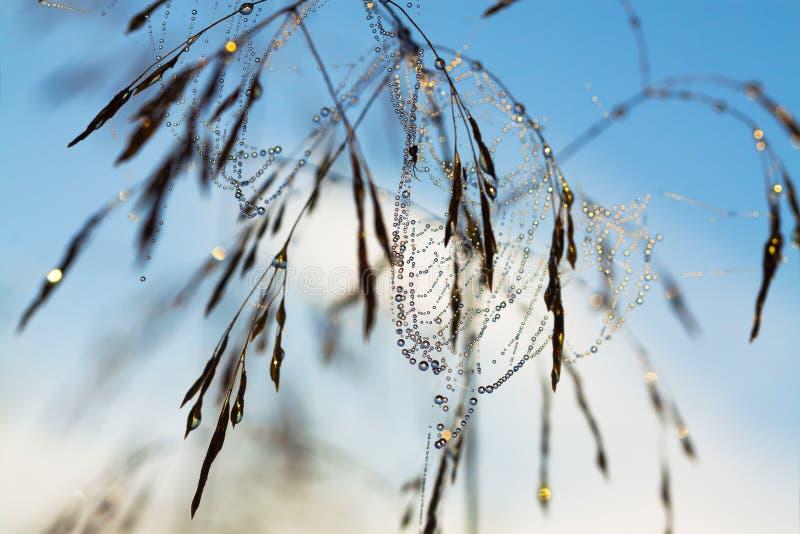 Araña en un Web fotos de archivo libres de regalías