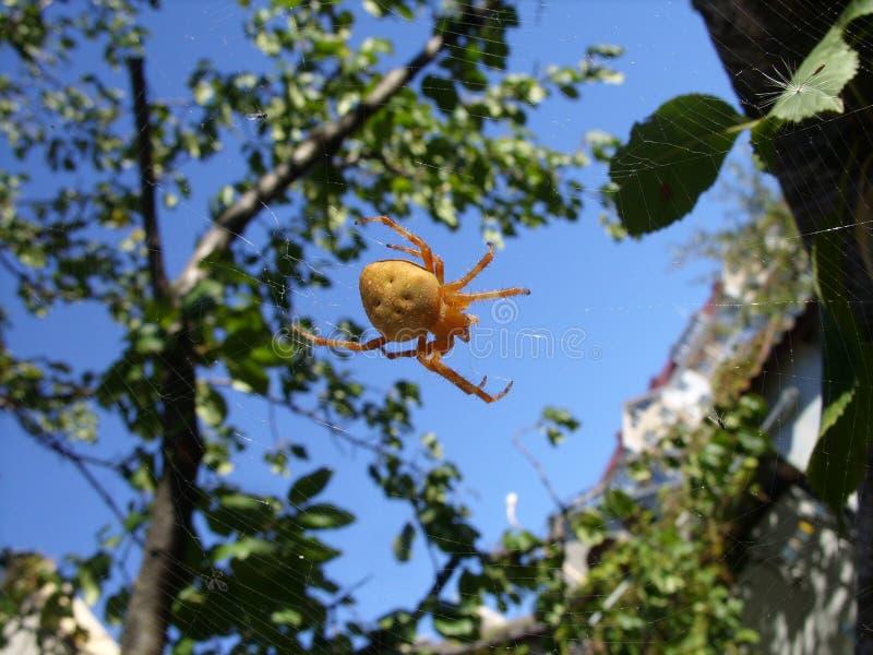 Araña en una web contra el cielo y un árbol foto de archivo