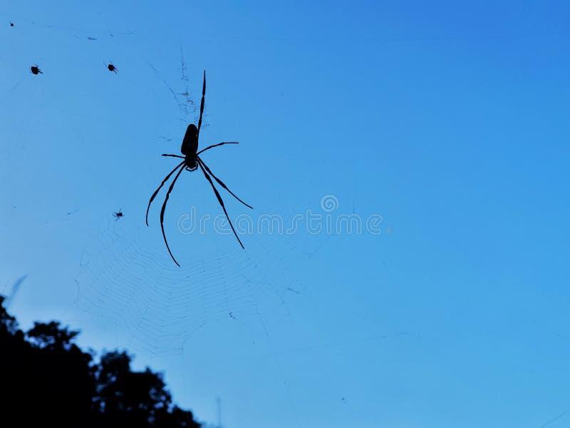 Araña en Web de araña fotografía de archivo