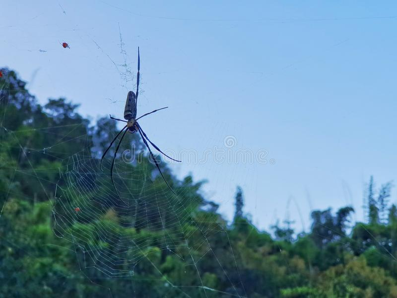 Araña en Web de araña fotografía de archivo libre de regalías