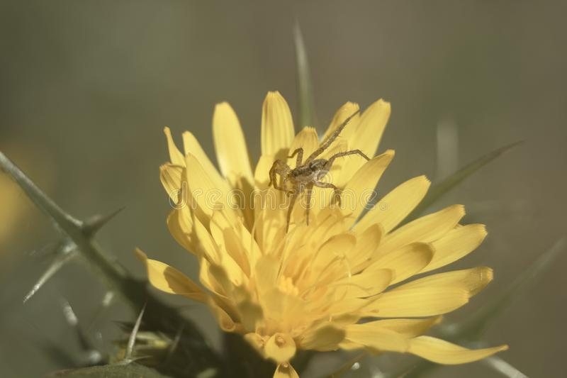 Araña encima de la flor imagen de archivo