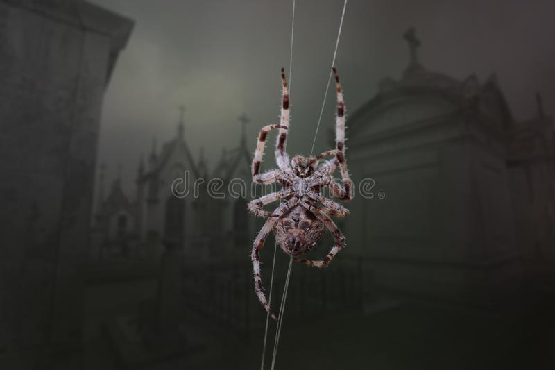 Araña espeluznante del cementerio imagenes de archivo